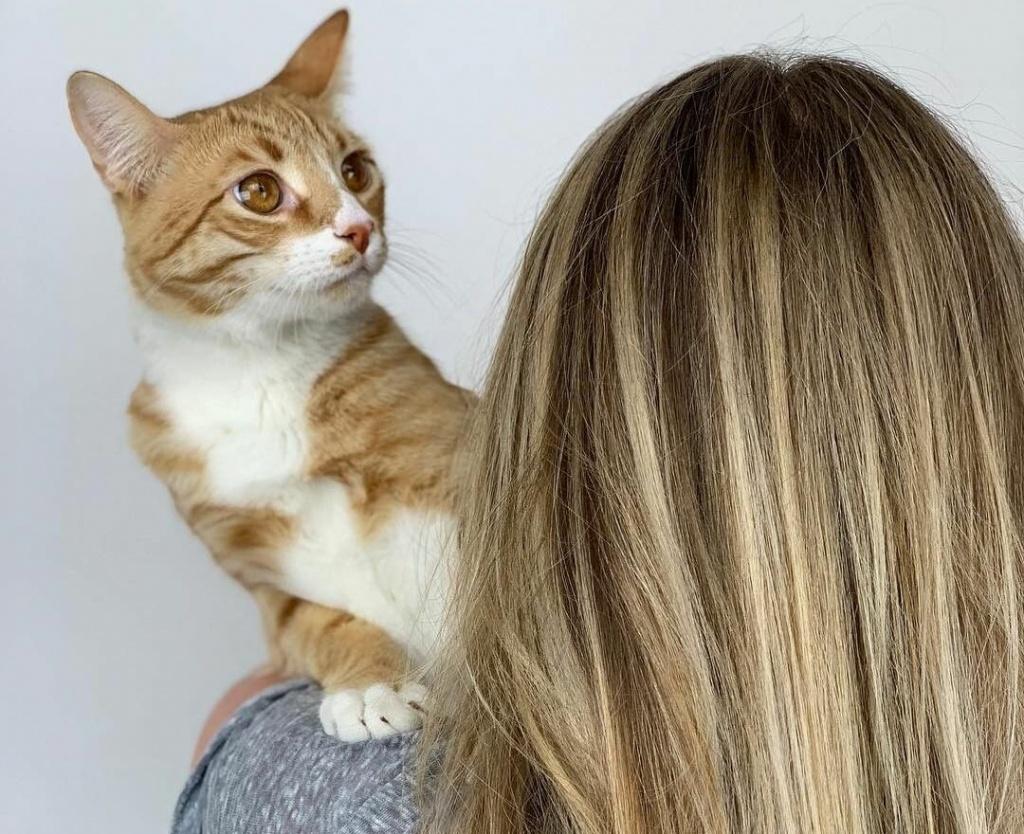 Что нужно знать об окрашивании волос дома