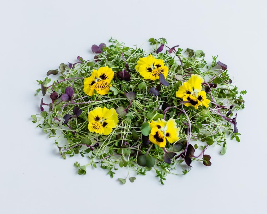 Set 1 (4) Кресс-салат, Мизуна красная, Редис красный +виола желтая.JPG