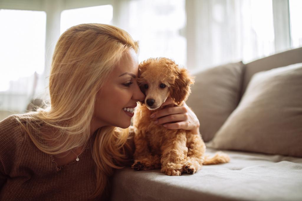 5 вопросов, которые вы зададите себе, прежде чем приютить бездомное животное