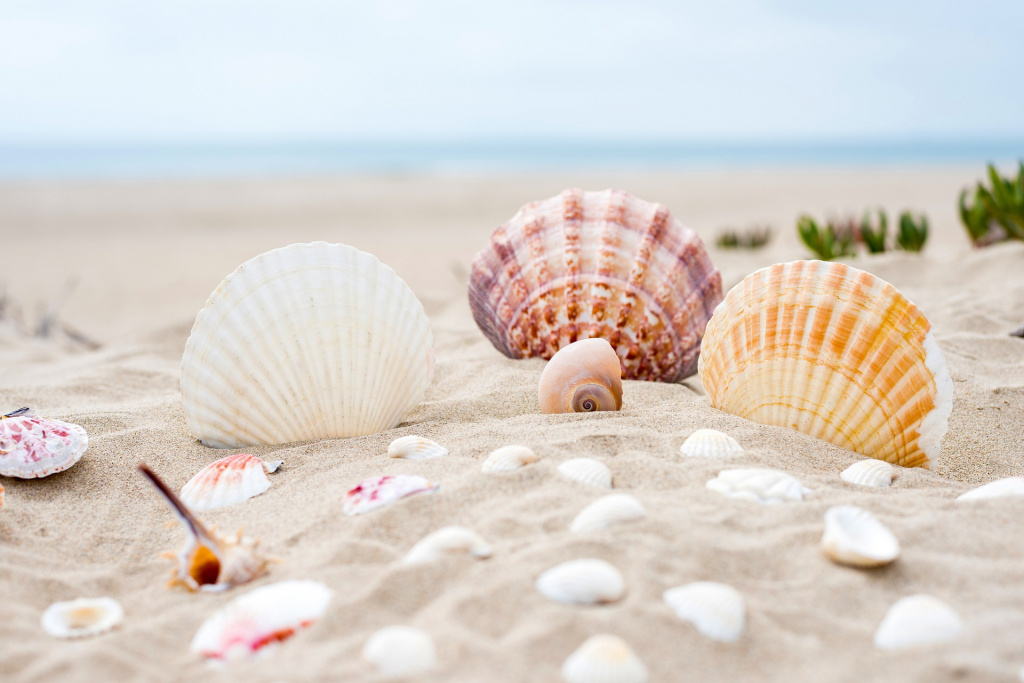 beach-2879929_1920.jpg