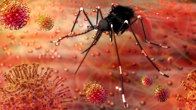 Вирус Зика уже в Европе: что важно знать о заболевании