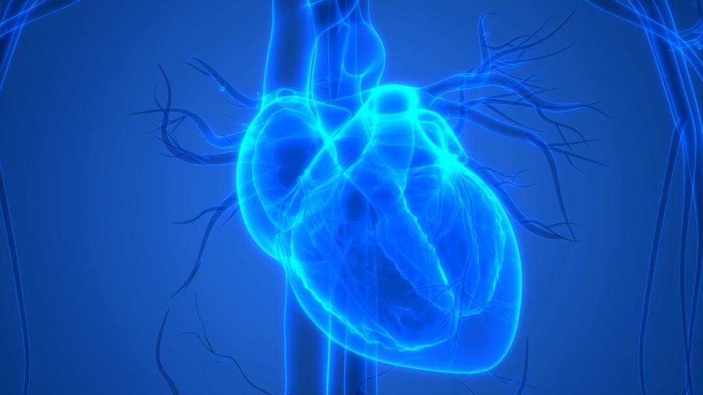 Как «тяжелый» алкоголь губит сердце
