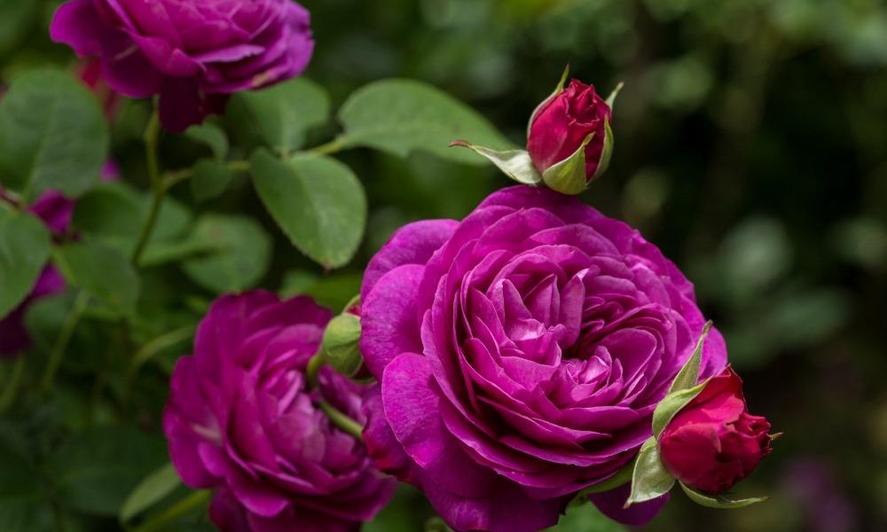 выставка роз.jpg