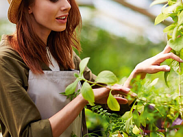 Что такое органические продукты и есть ли они в России