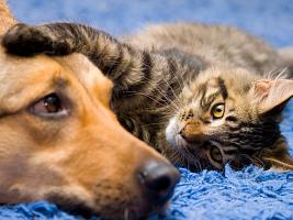 Ученые назвали пять животных, которые способны лечить людей