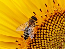 Жалят и кусают: чем опасны укусы насекомых