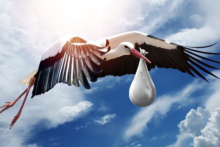 bird-3058712_960_720_900.jpg