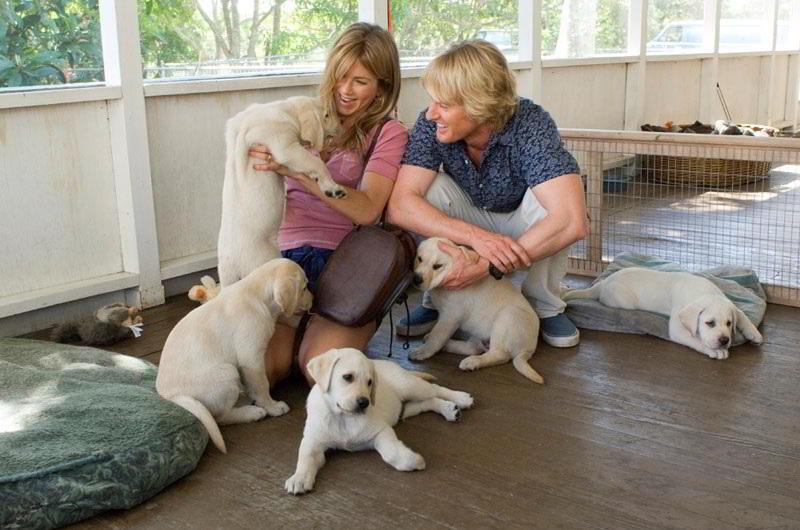 Общение ссобаками улучшает здоровье престарелых людей— Ученые